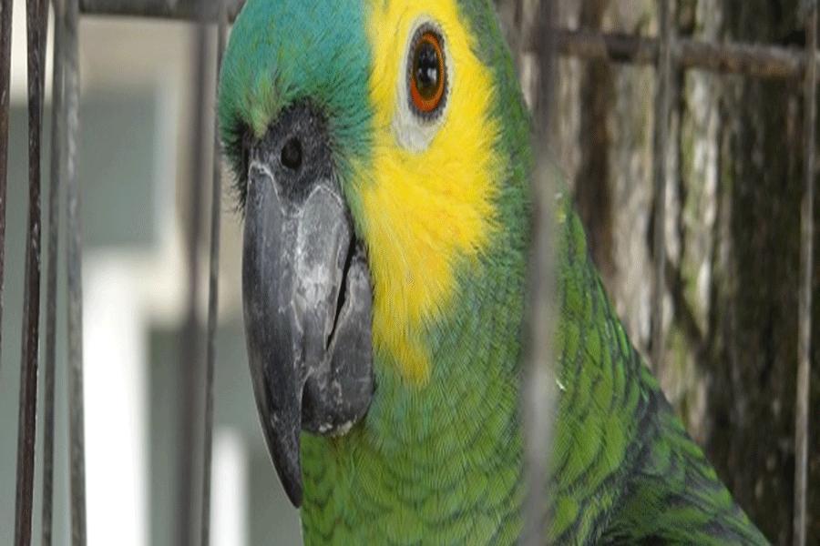 Fiscalização preventiva devolve animais silvestres ao meio ambiente em Minas Gerais