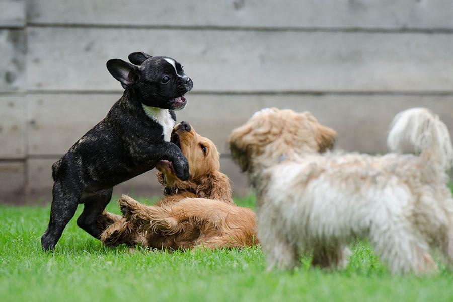 Animais de estimação requerem cuidados durante quarentena