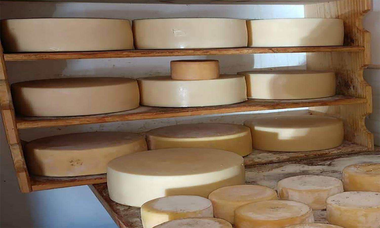 Novas regiões mineiras trabalham nos regulamentos do queijo artesanal