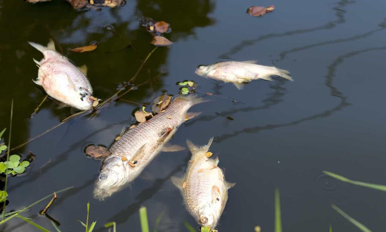 Mortandade de peixes no Rio Verde está em investigação